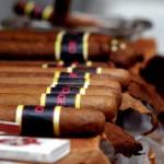Freshly rolled cigars