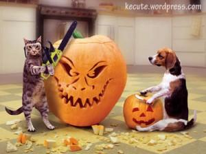 Cat vs Dog Pumpkin Carving