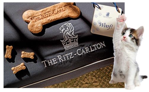 the ritz carlton - pet friendly hotels