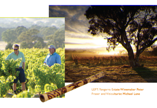 yangarra estate - australian wine country