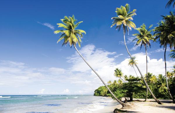 tony abou-ganim - liming in trinidad