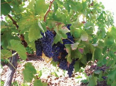 sicilian red wines