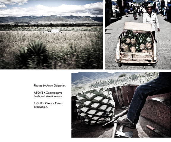 oaxaca mezcal production