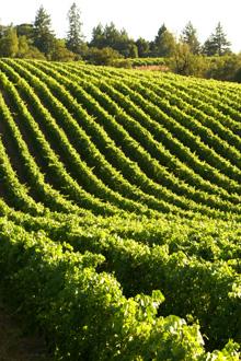 E. & J. Gallo Winery Wins Corporate Social Responsibility Award