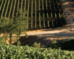 Napa Valley – <em>Wedding Daze</em>
