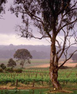 Australian Wineries