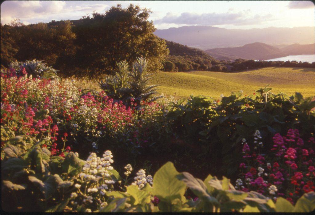 Garden Valley at Chappellet.
