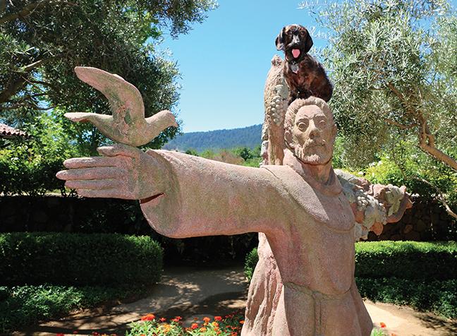 St Francis Myrna
