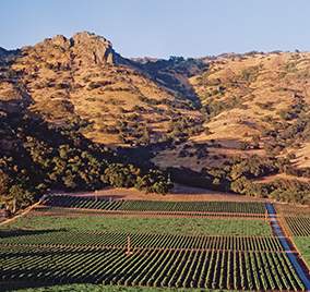 FAY Vineyards overlooking The Palisades.