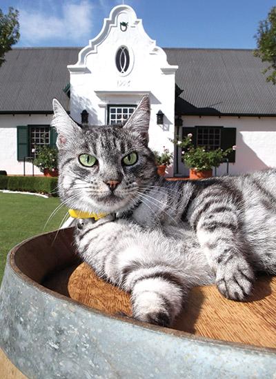 Wine-cats-1