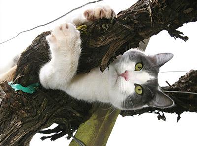 Wine-cats-3