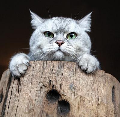 Wine-cats-4
