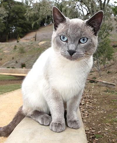Wine-cats-6