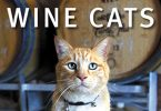 Wine-cats-thumb
