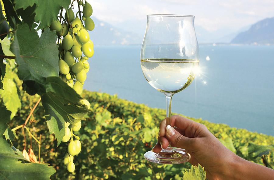 Wines_Altitude-1