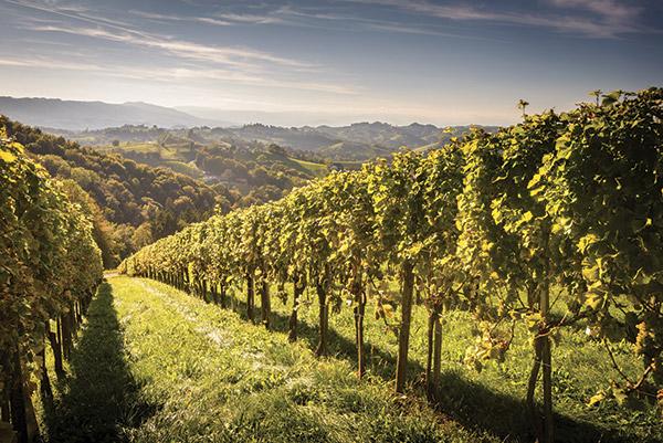 Wines_Altitude-11