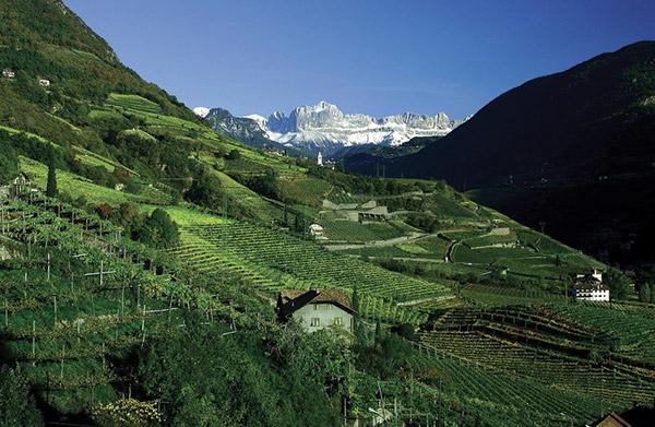Wines_Altitude-8