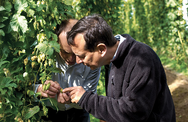 Jim intensely checking the hops