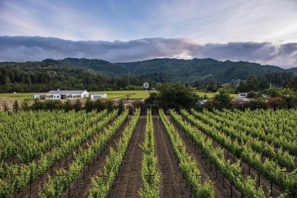 Vineyards in St. Helena.