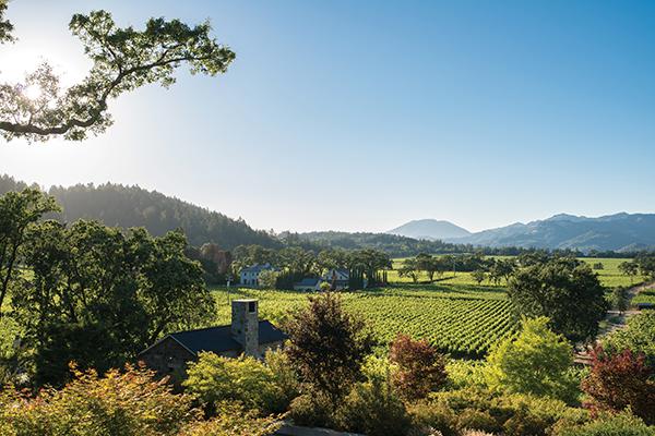 Trinchero Napa Valley vineyard.